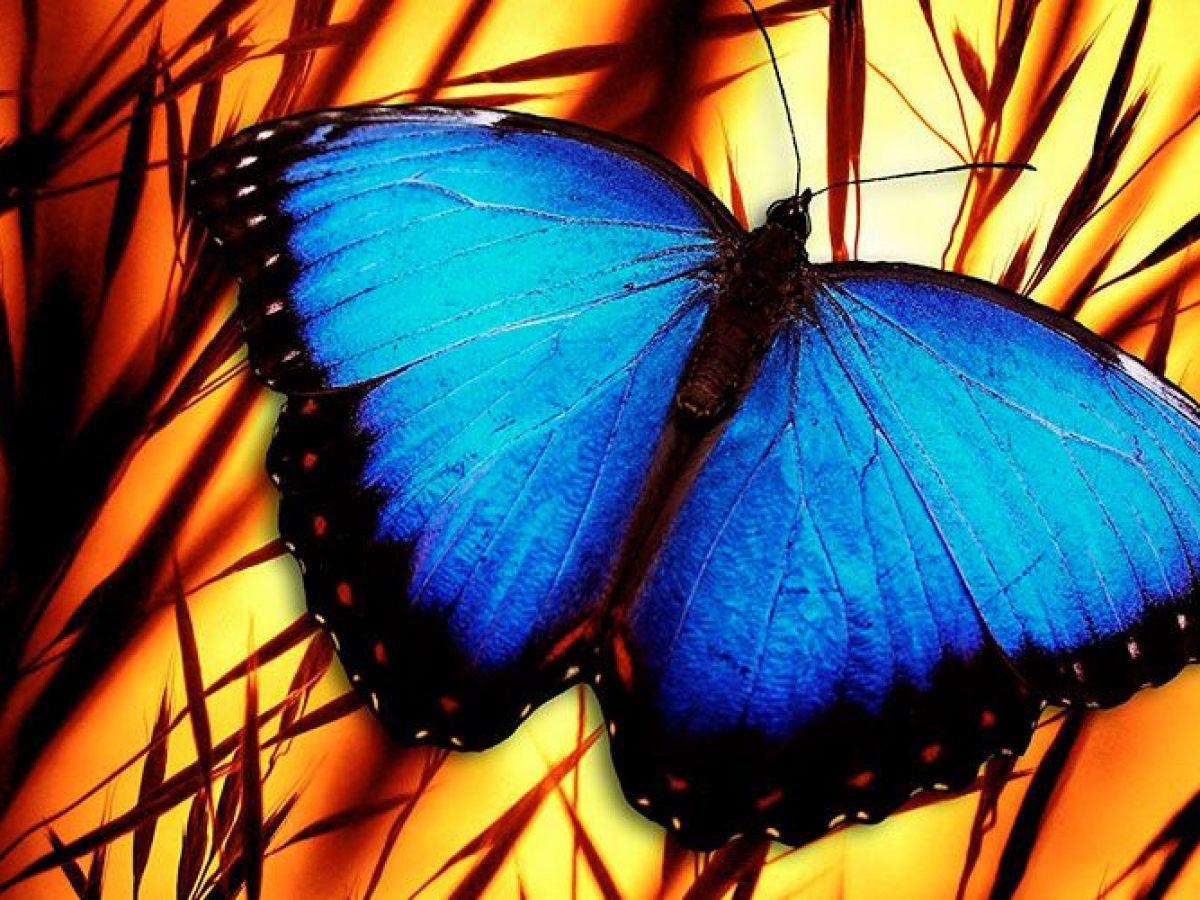 La Mariposa Azul Cuento Oriental Sobre La Responsabilidad