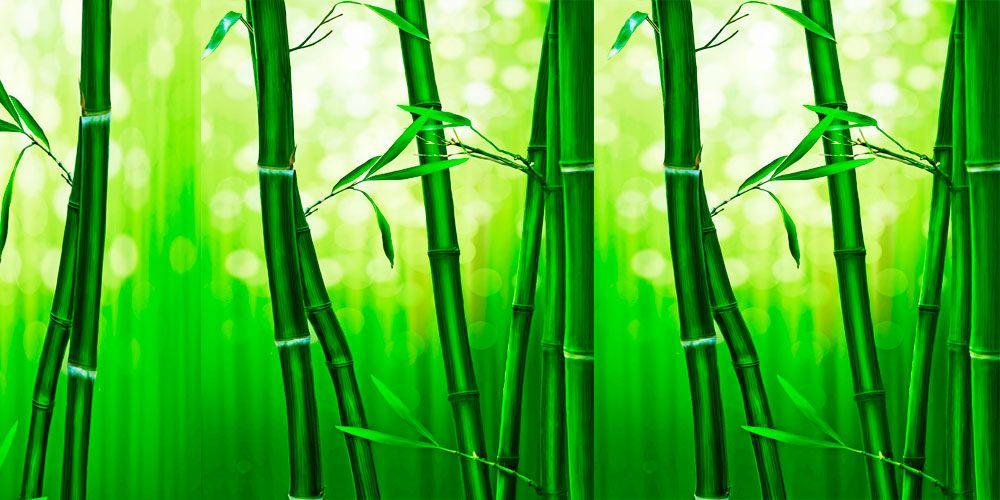 Cuento oriental para momentos de crisis existencial: El helecho y el bambú