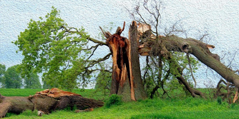 Si un árbol cae en un bosque, una reflexión sobre la existencia del filósofo Berkeley