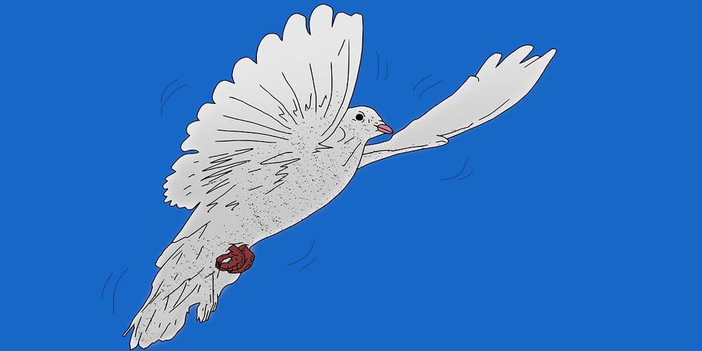 El obsequio de las palomas, fábula china con valores sobre la bondad y la empatía