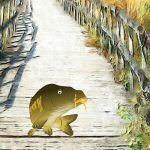 La carpa en el camino, fábula china para adolescentes y adultos