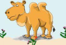 Poesías de Gloria Fuertes para los niños: El camello cojito