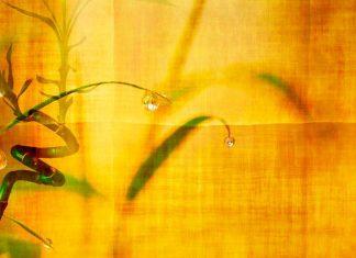 La caña de bambú, un cuento de la India con valores