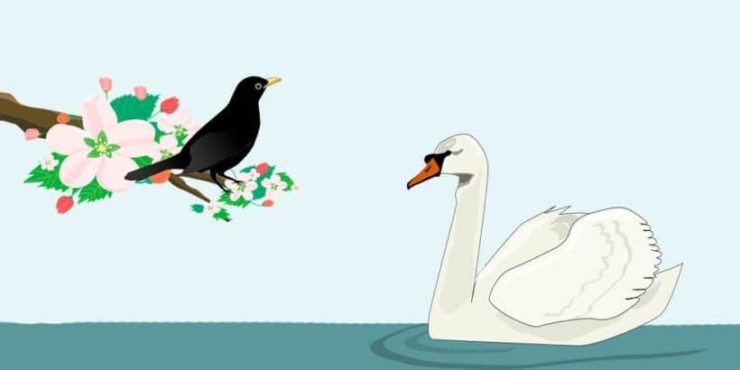 El cisne y el cuervo: fábula corta sobre la envidia para niños