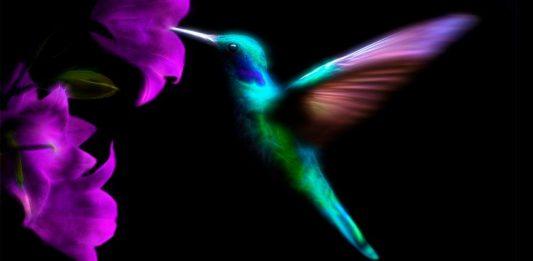 Leyenda maya para niños:leyenda del colibrí