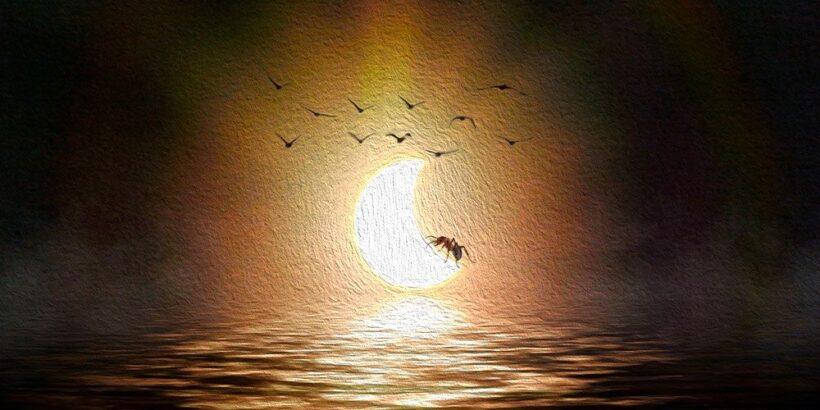 El eclipse y el zompopo, una leyenda maya