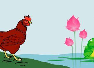 La rana y la gallina, una fábula con valores para niños