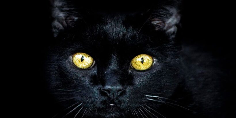 Historia de terrorn de Allan Poe: El gato negro