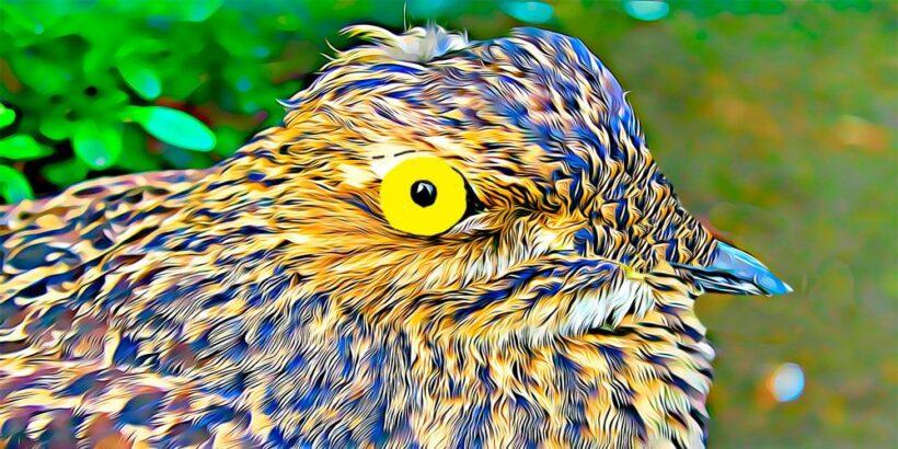 Leyenda de Bolivia: el lamento del pájaro Guajojó