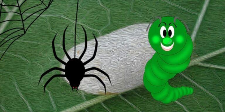 El gusano de seda y la araña, una fábula sobre el esfuerzo