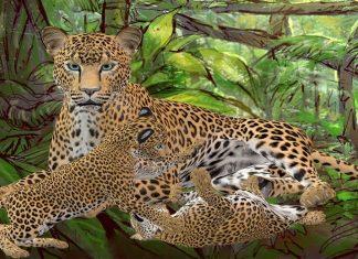 Una increíble leyenda de África: Las lágrimas del guepardo