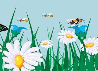 Una fábula sobre la generosidad: La mariposa y las abejas