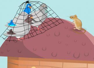 Las palomas y el ratón, una fábula corta sobre la obediencia