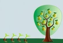 La prueba de las semillas, un cuento con valores para niños