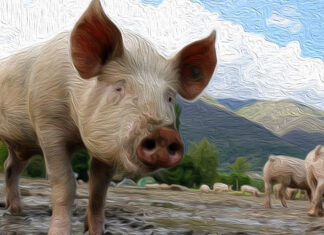 Fábula china sobre la educación de los hijos: Por qué Zeng mató al cerdo
