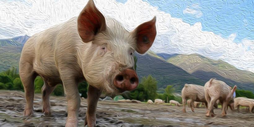 La fábula Por qué Zeng mató al cerdo