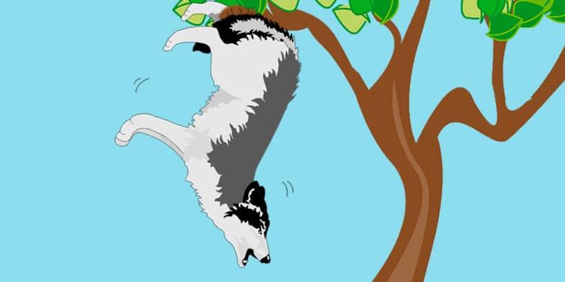 Fábula sobre los engaños y la prudencia: El lobo colgado de un árbol