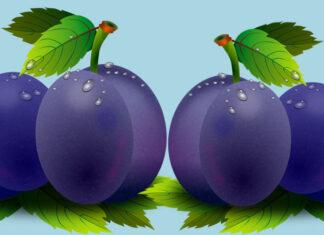 Cuentos para niños sobre las mentiras: La semilla