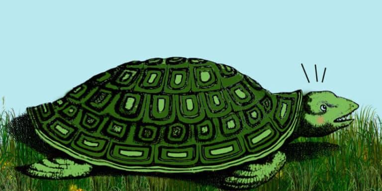 La tortuga gigante, un cuento de Horacio Quiroga para niños