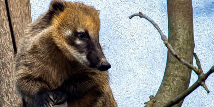 Cuento de Horacio Quiroga para niños: Los dos cachorros de coatí