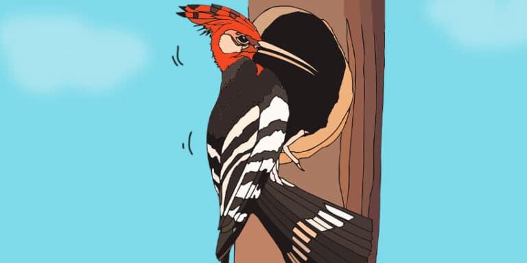 Leyenda del pájaro carpintero
