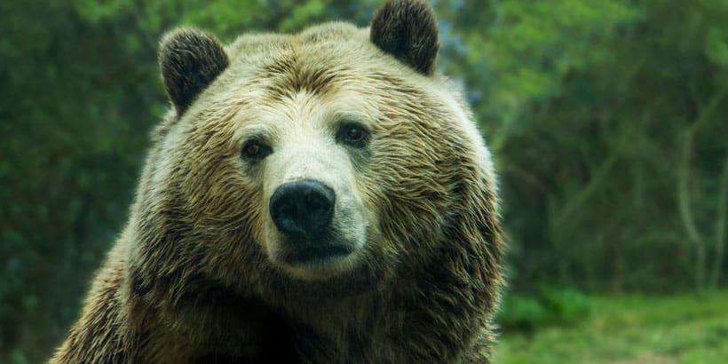 El oso, cuento sobre el Carpe Díem