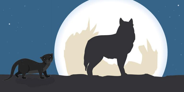 La comadreja y el coyote, un cuento popular mexicano